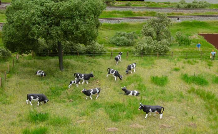 Græsningsareal med køer - og landmænd, der har en samtale over hegnet