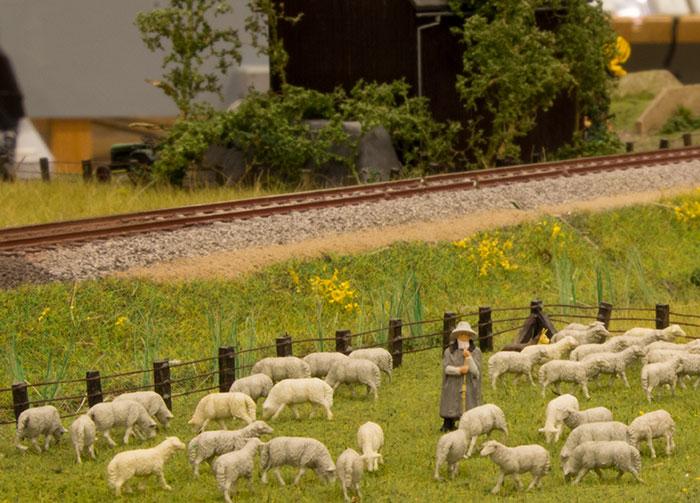 Får får får - eller får får lam?
