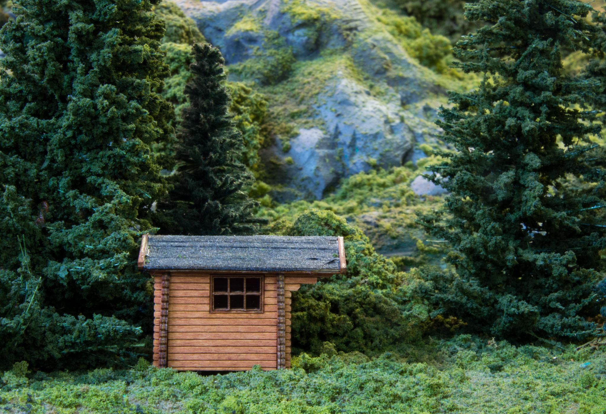 Hytte i skov