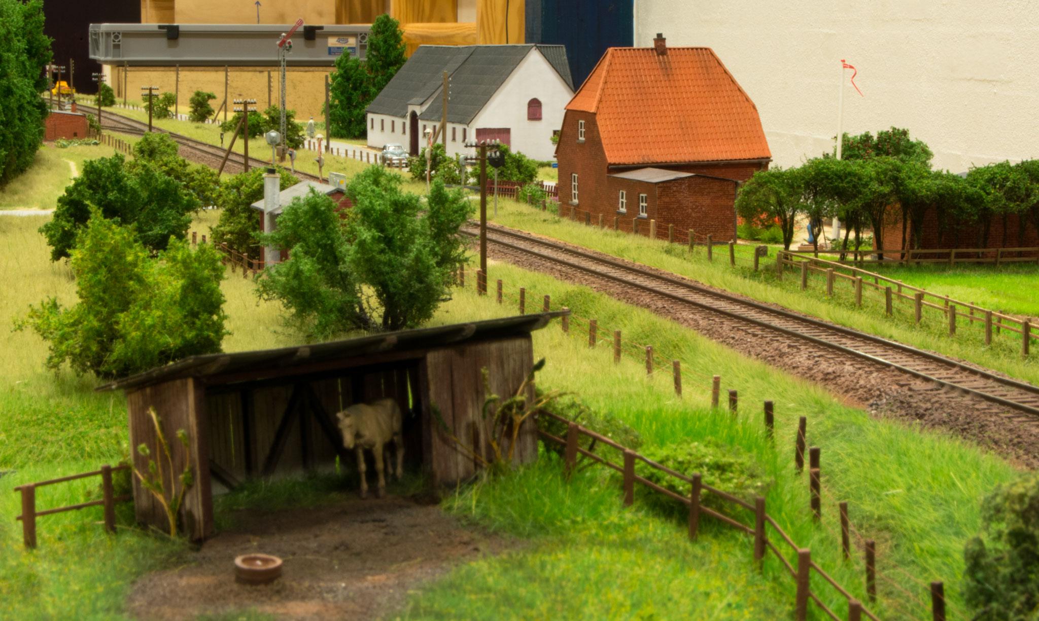 En hestefold er også en del af miljøet omkring Søbylund
